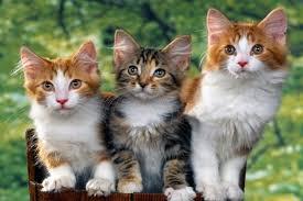 Mơ thấy mèo đánh lô tô miền bắc