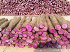 Rễ cây biến sắc bán gần 40 nghìn nửa cân