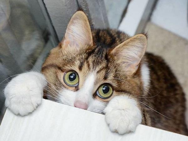 Mơ thấy mèo ăn thịt người là điềm báo gì, đánh con nào để trúng?